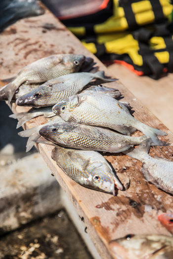 High angle view of fish for sale