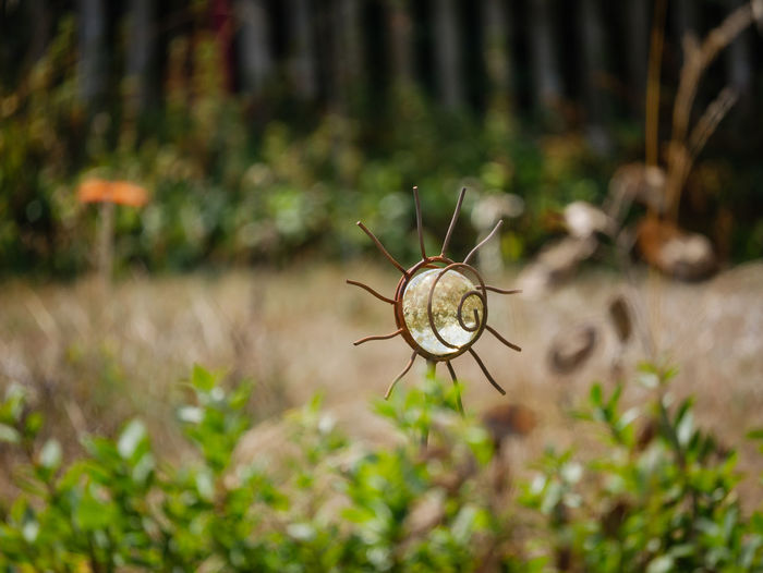 Art Decor Arthropod Beauty In Nature Close-up Day Decoration Fragility Growth Invertebrate Metalwork Nature No People Outdoors Selective Focus