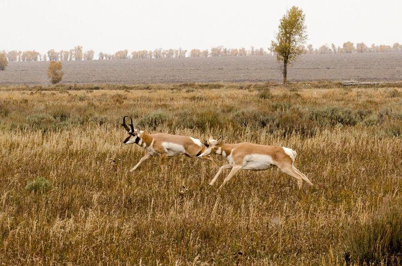 Animals grazing on grassy field
