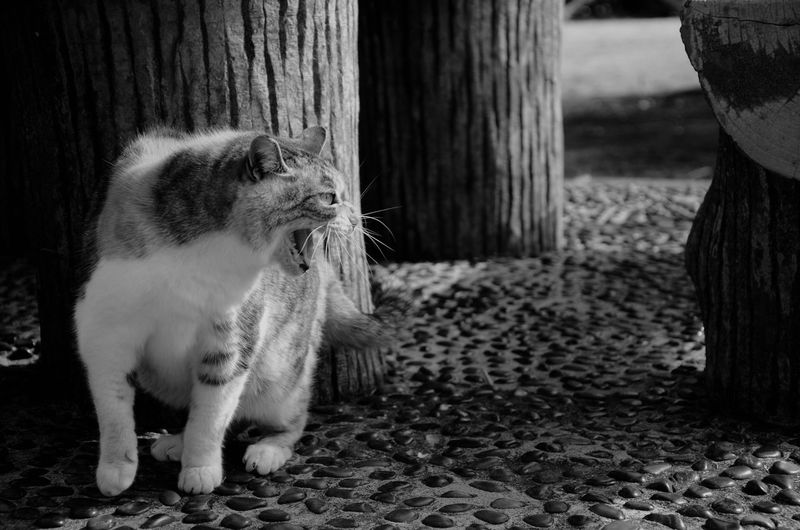 Close-up of cat standing by wooden post