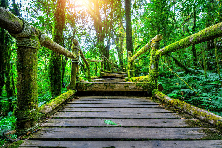 Ang ka nature trail in Doi Inthanon national park , Chiang mai , Thailand. Tree Plant Growth Green Color Forest Direction The Way Forward Day Trunk Tree Trunk Architecture Tranquility Footpath Nature Land No People Park Staircase Wood - Material Built Structure Outdoors