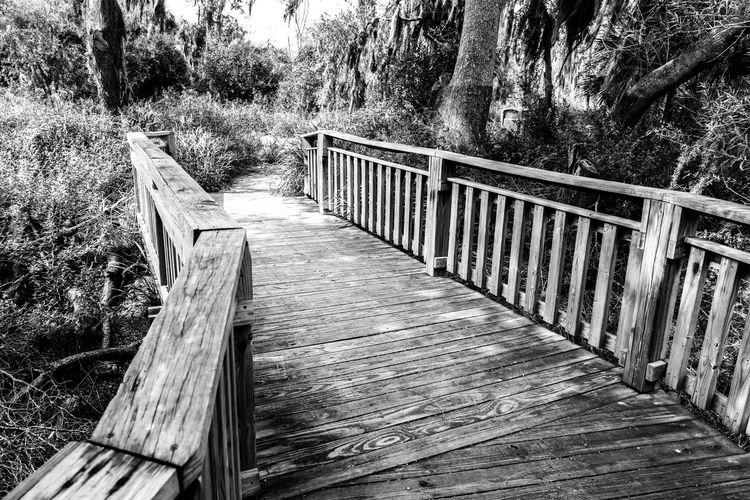 Into the Shrubs. Nature Nature_collection Nature Photography Walking Around Walkway Wood Wood - Material State Park  Palm Trees Trees Dead Tree Still Life Branches And Sky Mesquite Landscape South Texas Santa Ana Wildlife Refuge NX1 Point Of View Relaxing Monochrome Black And White Black & White Black And White Photography