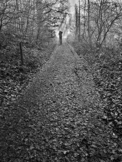 Foggy View Leaves On The Ground Foggy Weather Foggy Foggy Morning Winter Wintertime Derbyshire Countryside Path Forward Silhouette Silhoutte Photography Pathways Pathway Path In Nature EyeEm Best Shots Hikingadventures English Countryside Peak District Northern England Pattern Full Frame Backgrounds Textured  Indoors  Close-up High Angle View Nature Sunlight Creativity Flooring
