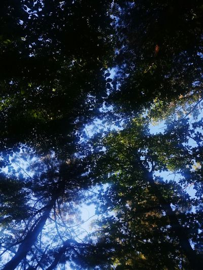 Forest Forest Path Trees Tree And Sky Trees And Sky Forests Motherofnature Mother Nature Mauntain Mauntains Waterfall Waterfalls Ağaçlı Ağaçlarınarası Ağaçlıyol Ağaç Kabuğu Green Color Natural Natural Beauty Nature Yeşil Green Wasserfall Wasserfälle