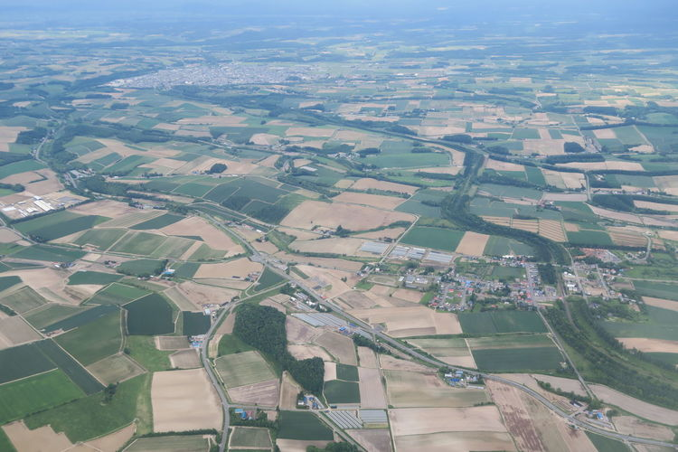 Aerial view of agricultural field in city