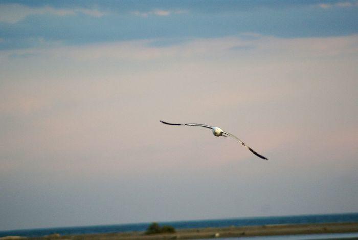 Sky Flighing High Photography Nature EyeEm Best Shots EyeEm Gallery Seagull EyeEm Nature Lover Wanderlust Beautiful