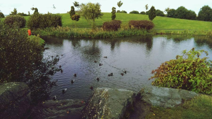 Rathcoole Park