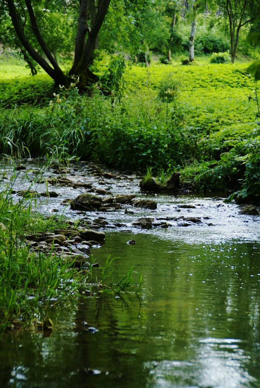 nature, tree, tranquility, tranquil scene, water, beauty in nature, stream, green, no people, green color, outdoors, growth, forest, day, scenics, grass, tree trunk