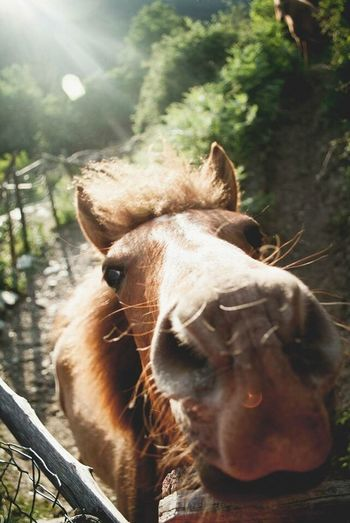 Horse Horses Horse Riding Light Sun Animals Animal Animal Photography Animal_collection Belong Anywhere