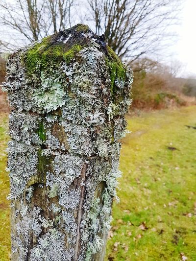Indicator spp Nature Growth Beauty In Nature No People Outdoors Day Close-up Green Color Lichen Lichens Lichen Beauty Lichen Pattern Lichen White Lichen On Wood Lichen Maze Lichenized Fungus Lichenlove Textured  Growth Clean Air Amazing Nature Inspiring Awe Awesome