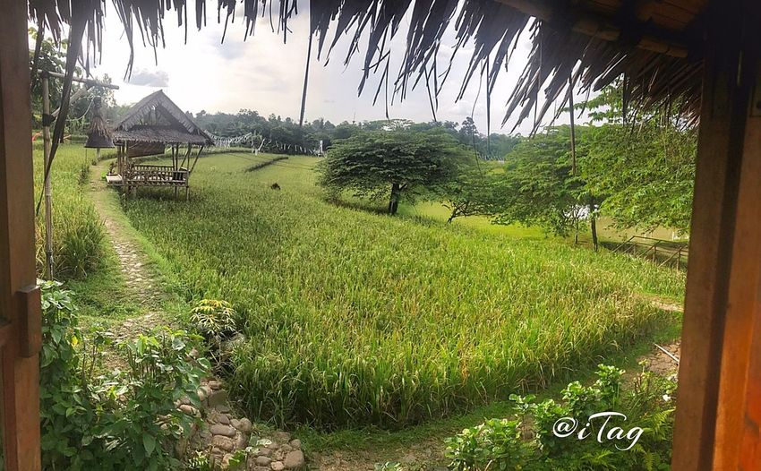 At Bukit Air, Bogor. A Place By ITag Family Holiday By ITag Family Time By ITag View By ITag Nature By ITag