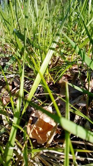 Plants 🌱 Grass Green