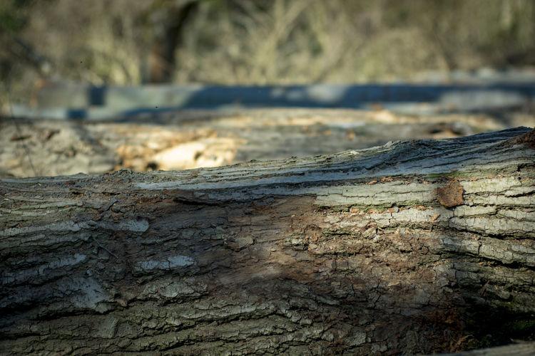 Wooden world