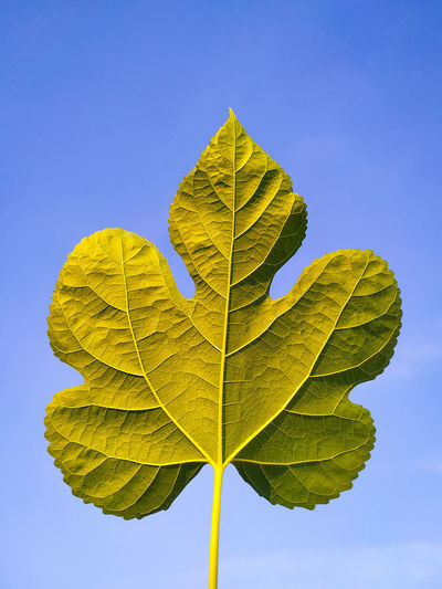 Close-up of yellow leaf against blue sky