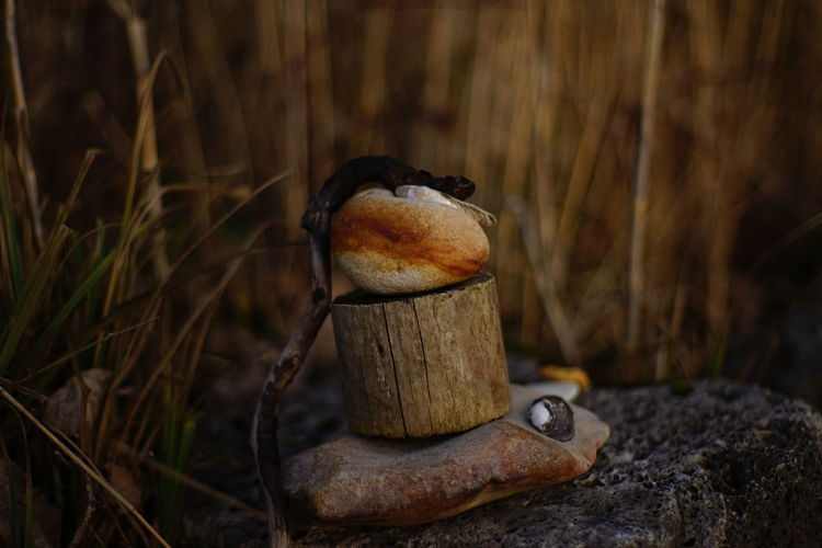 Schilf Close-up Day Nature No People Outdoors Reed Steinmännchen Stone Stone Figure Warm Colors