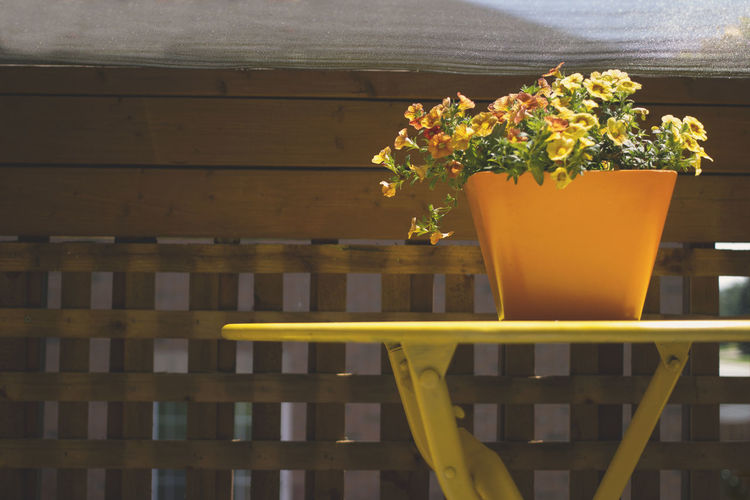 Close-up of yellow flower pot on table