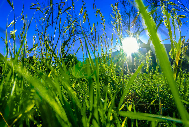 Grass in Spain EyeEm Nature Lover Eye Em Nature Lover Summer Freedom Summer Views Sky Happiness Tree Agriculture Sunlight Field Sky Close-up Grass Green Color Plant Shining Green Calm Sun Countryside