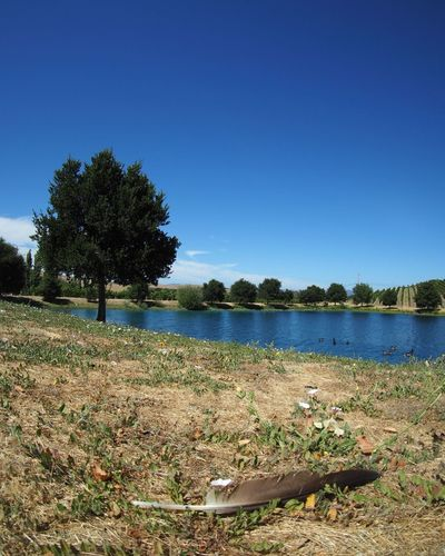Scenic view of calm lake against clear blue sky