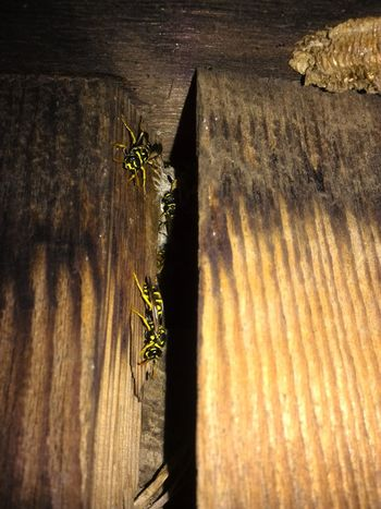 Patterns In Nature Attention To Detail Wood Grain Wood - Material Wood Wasps Nest Nests Wasps Wasp Bee Nest Bees Insects  Outdoors Night Photography Night Hive Invaded Stripes Pattern The Week On Eyem My Year My View Perspectives On Nature