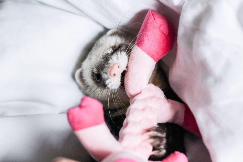 Close-up of kitten sleeping on bed