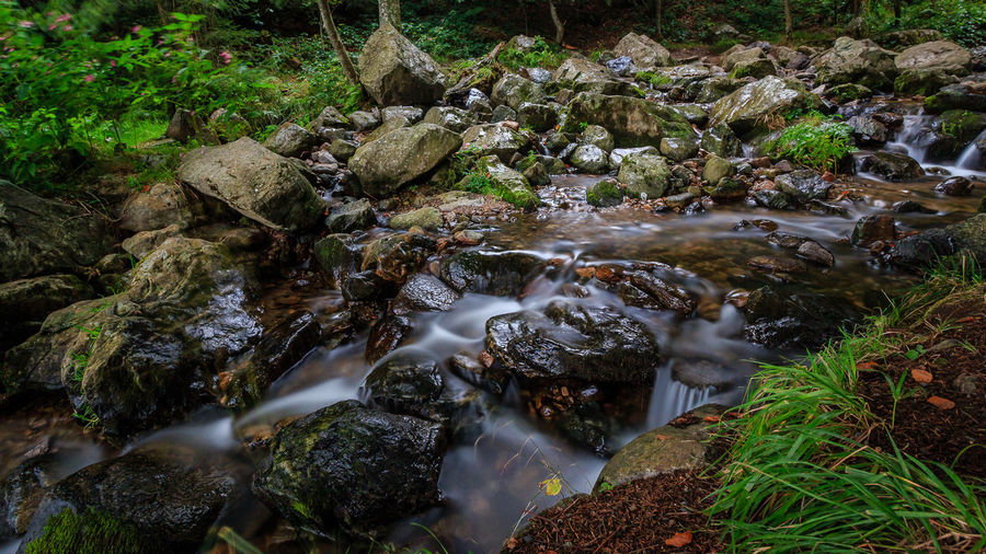 fotografiert an einem regnerischen Samstagvormittag Beauty In Nature Blurred Motion Day Flowing Water Forest Long Exposure Moss Motion Nature No People Outdoors Rock - Object Scenics Stream Stream - Flowing Water Tranquility Tree Water Waterfall