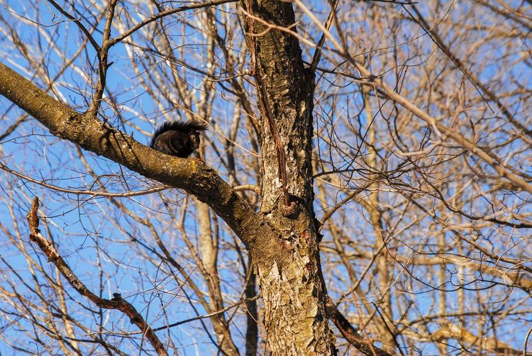 Squirrel views Tree Branch Animals In The Wild Low Angle View Bare Tree Animal Wildlife Animal Themes Animal Bird One Animal Vertebrate Plant Perching Day Nature Sky No People Trunk Tree Trunk Outdoors Dead Plant