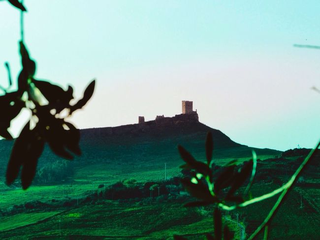 No People Nature Sky Plant Outdoors Growth Clear Sky Animal Themes Day Mountain Beauty In Nature Scenics Close-up Sicily Castle Cefala Diana