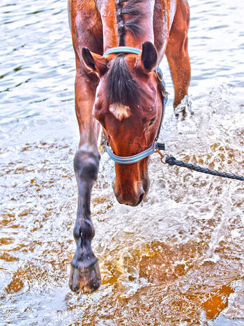 Animal Themes Close-up Day Domestic Animals Horse Livestock Mammal No People Outdoors Water