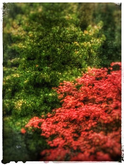 Shades of automn Red Selective Focus Nature Green Color Beauty In Nature Tranquility Outdoors Tranquil Scene Autumn 🍂