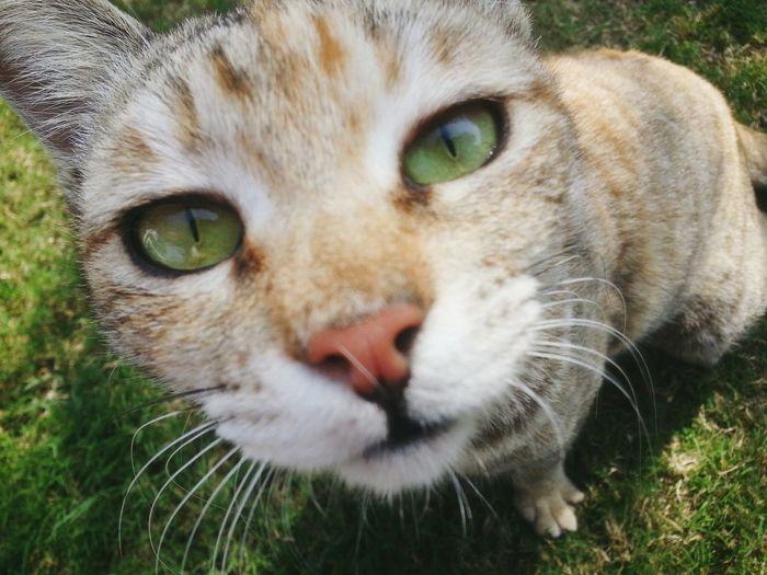 Straylove Stray Cat Darling Sunshine ☀