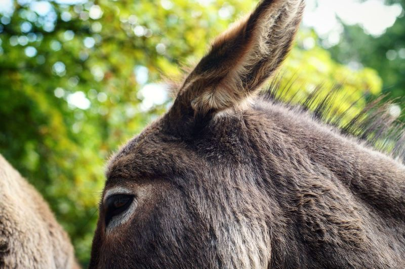 Close-Up Of Donkey Against Trees