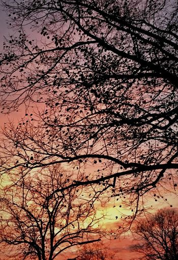 fire_sky. Hamburg_AN Easter 2018 Branches And Sky Lines Lines And Shapes Hamburgmeineperle Hamburg Evening Sky Tree Tree Trunk Sunset Silhouettes Sunset_collection Sunset Tree Sky Branch Beauty In Nature Sunset Nature Tranquility No People Silhouette Scenics - Nature Tranquil Scene Bare Tree Growth Full Frame Backgrounds Cloud - Sky Idyllic