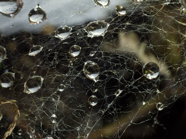 After the Rain Beauty In Nature Close-up Dark Backgrund Day Fragility High Angle View Macro Macro Photography Nature No People Outdoors Raindrops On Spider Web Spider Web Water Drop Web Wet