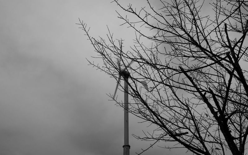 Low angle view of bird perching on bare tree against sky