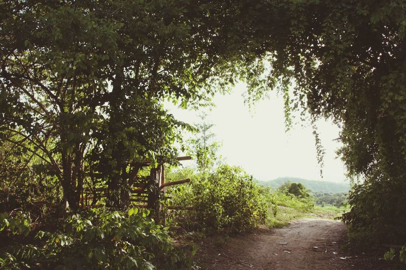 Trees Green Frame Gate Countryside Nature Oudoors No People in North Thailand South East Asia