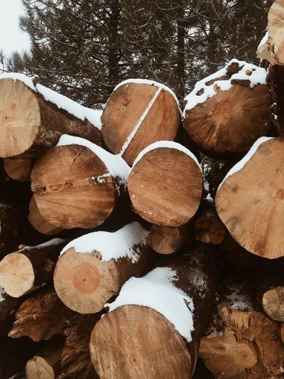 Stack Timber Log Day Outdoors Large Group Of Objects Full Frame Woodpile Close-up Nature