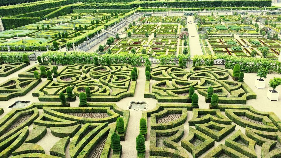 Green Color Full Frame Day No People Backgrounds Growth Outdoors Nature Grass Close-up Villandry Gardens Villandry Chateau De Villandry Villandry Castle