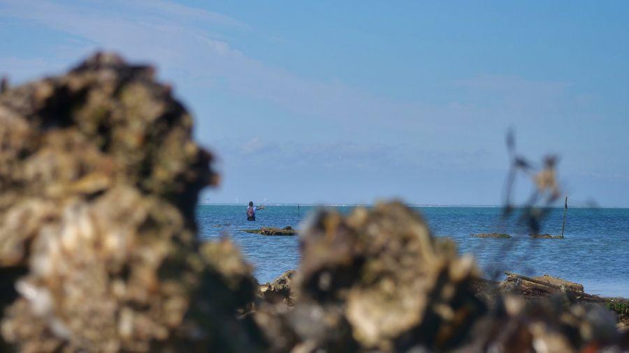 Fresh Fishing Ocean Rock Launched Lure Ile De Ré WestCoast France