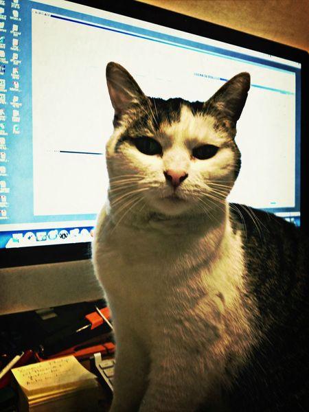 Cat at work...