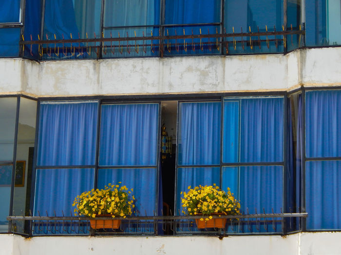 Abundance Arrangement Beauty In Nature Blue Day Flower Flowers Growth Loft Multi Colored Nature No People Outdoors Plant Side By Side Window Yellow