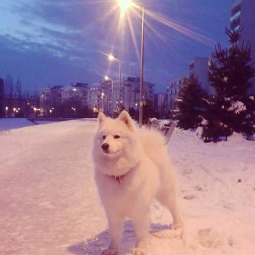 Icey Like A White Wolf @ Zagreb winter