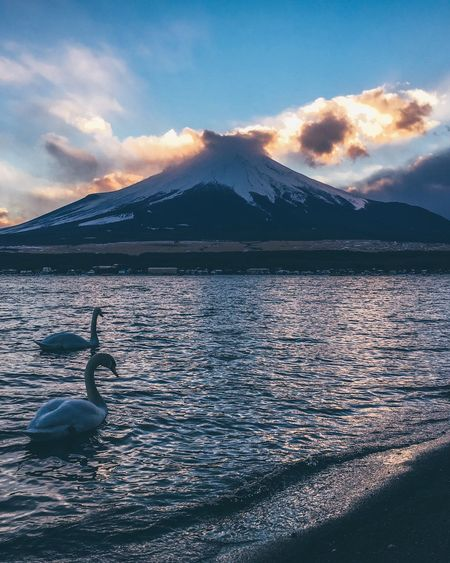 Mount FuJi Japan Cloud - Sky Sky Water Beauty In Nature Mountain Nature Scenics - Nature Animal Themes Sunset Tranquil Scene Sea Animal Wildlife Bird
