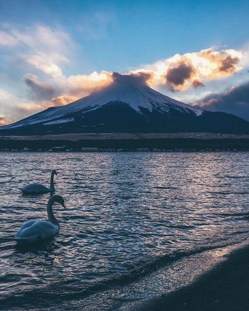 Mount FuJi Japan Cloud - Sky Sky Water Beauty In Nature Mountain Nature Scenics - Nature Animal Themes Sunset Tranquil Scene Sea Animal Wildlife Bird