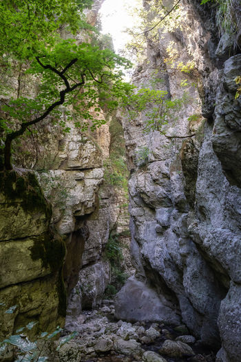 Low angle view of rock amidst trees in forest