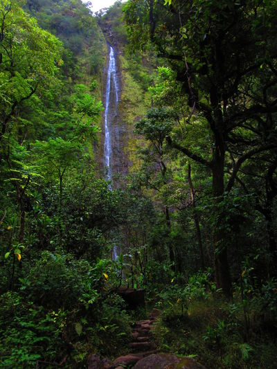 Kipahulu, Maui, Hawaii Hawaii Maui Beauty In Nature Day Forest Freshness Growth Hiking Trail Nature No People Outdoors Scenics Trail Tranquil Scene Tranquility Travel Destinations Tree Water Waterfall