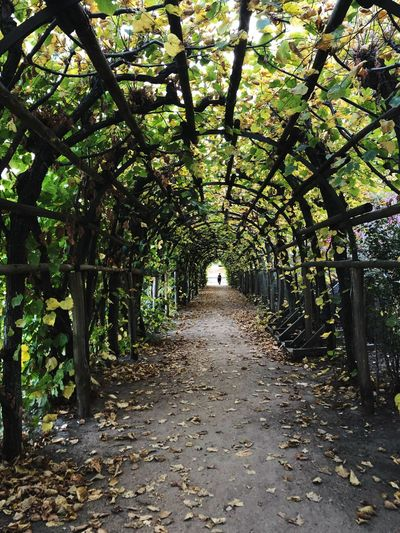 Tunnels of life Labyrinth Tunnel Tree Plant Direction The Way Forward Growth Footpath Day No People Nature Park Tranquility Beauty In Nature Diminishing Perspective Leaf Plant Part Tranquil Scene Outdoors Park - Man Made Space Land Autumn