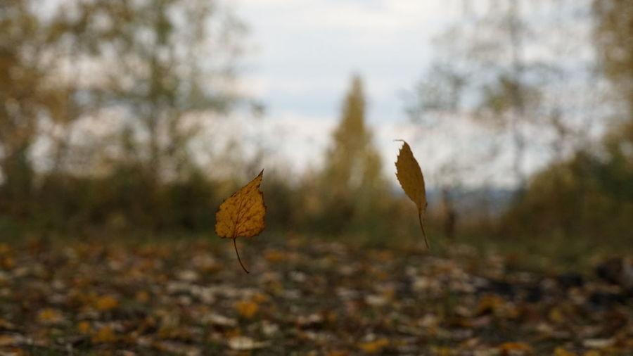 Autumn Mood 50