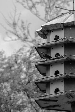 No Vacancy at the Purple Martin Apartments Again. Enjoying Life Perspective Point Of View NX1 Blackandwhite Black And White Black & White Black And White Photography Monochrome Still Life Fine Art Nature Photography Nature_collection Nature Gods Creation Bird Birds Bird Photography Birds_collection Birdwatching Birds Of EyeEm  Birds🐦⛅ Bird House No Vacancy