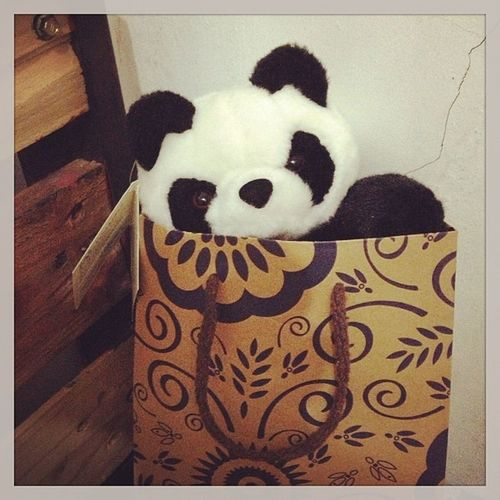 Bored there buddy??haha..XD Pandy Panda Waiting For owner