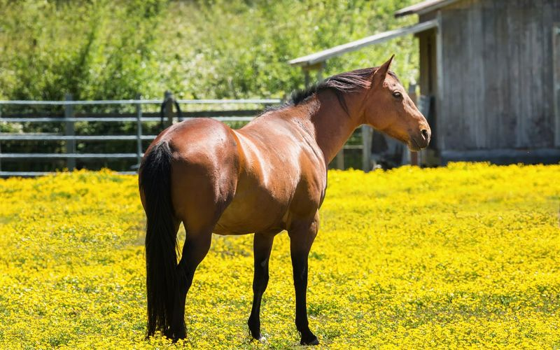 A Horse and Flowers One Animal Domestic Animals Mammal Outdoors Day No People Animal Themes Rural Scene Yellow Nature Animal Wildlife Horse Beauty In Nature